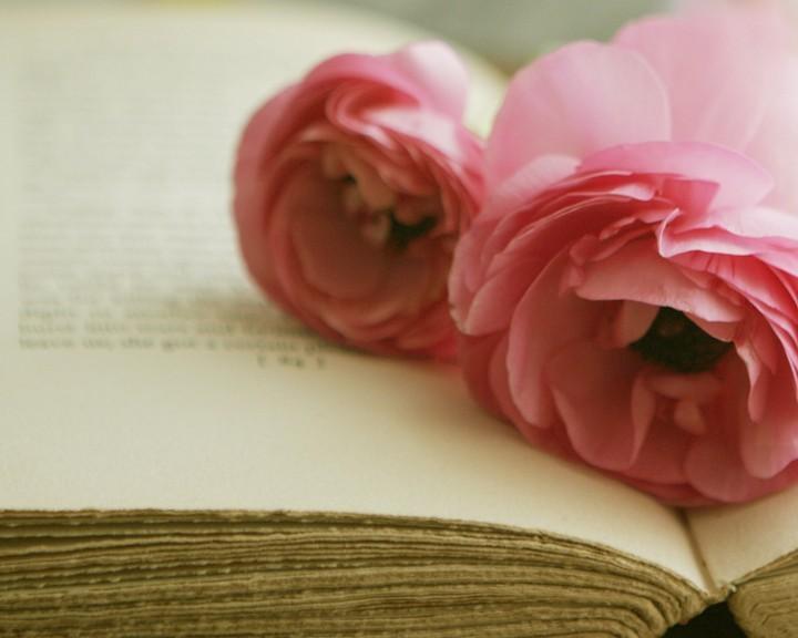 rose rose book