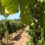 Penedés wine region